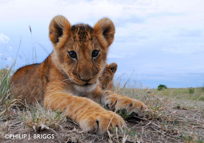 world lion day 1