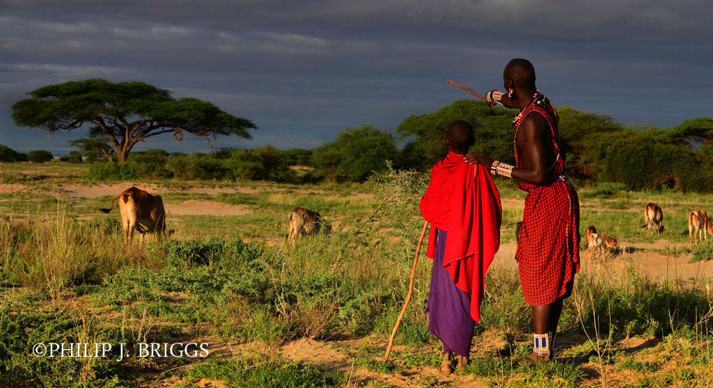 Although monitoring lions is a key responsibility of a Lion Guardian, they often do many duties assisting their communities. One of these important duties is helping young herders and their herds arrive home safely each day as well as finding lost children when they wander away from home.