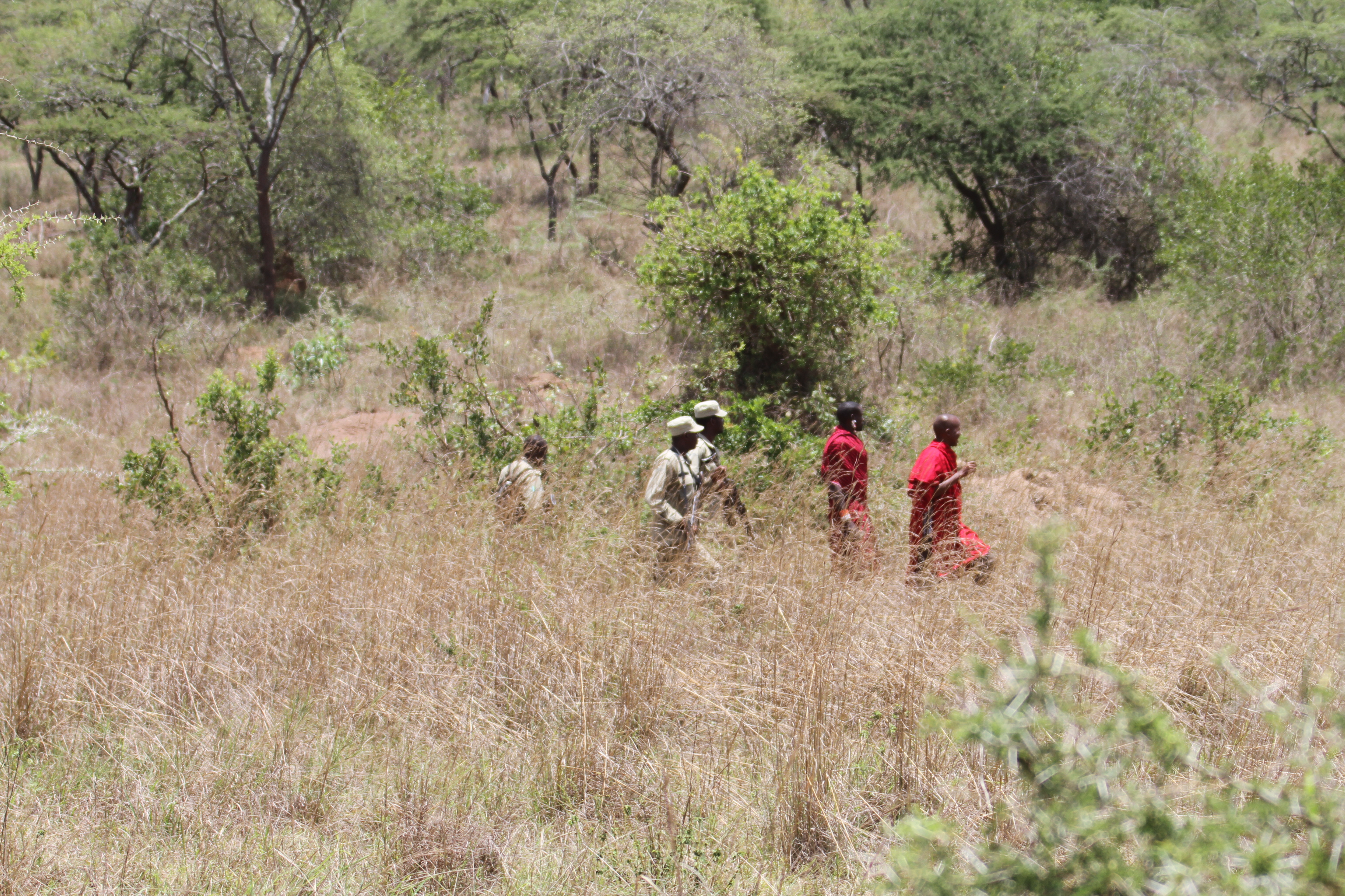 Eric and Kisimir showing the Akagera Park Rangers how to track. Photo Credit: Sarah Hall/African Parks
