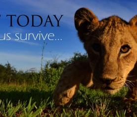 Act Today & Help Lions Survive