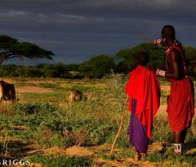 Herding Helps Create Wildlife Hotspots