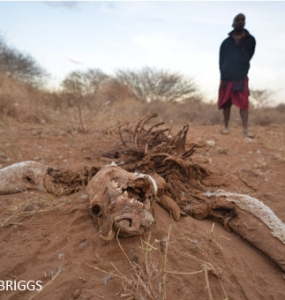 Lion killed at the border
