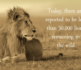 Join Us and Celebrate World Lion Day with Pride