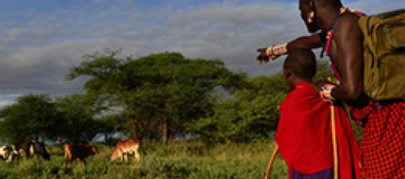From Attitudes to Actions: Predictors of Lion  Killing by Maasai Warriors
